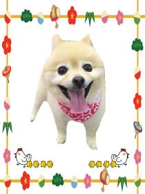 トリミング犬