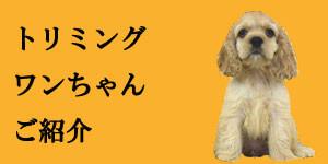 トリミング犬の紹介