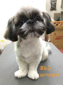 ミックス犬のトリミング犬