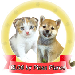 【Pines Planet Blog】