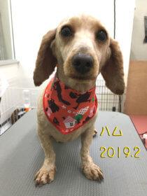 堺市トリミングミックス犬