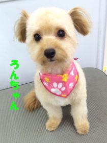 ミックスのトリミング犬
