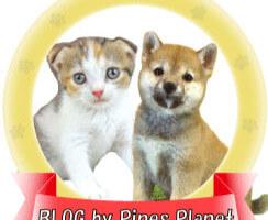 パインズプラネットのブログページ
